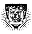 pit bull shield vector image vector image