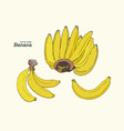 Set of line-art bananas overripe banana single vector image