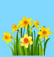 spring flowers on a blue background vector image