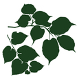 branches linden vector image vector image