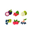 fresh ripe fruits and berries set mangosteen vector image vector image