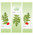 spring banners with poppy vector image vector image
