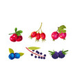 fresh ripe berries set cranberry dogrose vector image