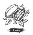 half cocoa bean or sketch sliced cocoa pod vector image vector image