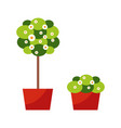room plants tall flora reminding tree blooming vector image vector image
