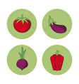 white background with vegetables tomato eggplant vector image vector image