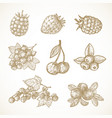 hand drawn berries collection vector image