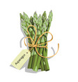 printasparagus vegetable stem vector image