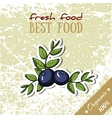 Healthy Food Blueberry vector image