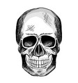 black and white sketch human skull vector image