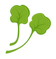 green fresh small leaves vector image vector image