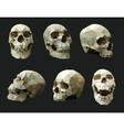 set human skulls vector image vector image