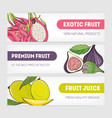 set of horizontal banners decorated with pitaya or vector image vector image
