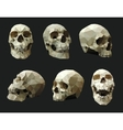 Set of Human Skulls vector image