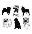 set pugs collection pedigree dogs black vector image