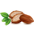 sweet cacao beans with leaf vector image