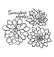 ink hand drawn succulents black and vector image vector image