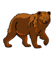 brown bear vector image vector image