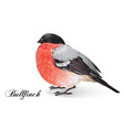 Christmas bullfinch bird vector image