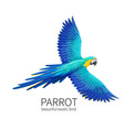 parrot bird vector image