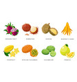 set exotic fruits detailed icons vector image vector image