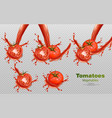 tomatoes splash isolated realistic vector image vector image