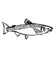 fish sketch on white background vector image vector image