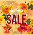 vivid leaves in design of autumn sale banner vector image vector image