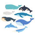 whales and dolphin set marine mammals vector image