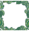 tropica plant border vector image