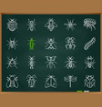 danger insect chalk draw line icons set vector image