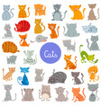funny cat and kitten characters large set vector image vector image