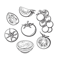 Sketch style set of ripe vector image vector image