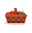 wicker basket full of fresh tomatoes organic and vector image vector image