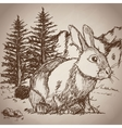 hand drawing rabbit landscape vintage vector image