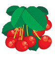 big bunch cherries and leaves summer bouquet vector image vector image
