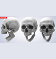 detailed graphic photorealistic human skulls set vector image vector image
