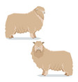 flat geometric leicester long-wool sheep vector image vector image