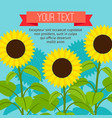 sunflower beautiful card vector image vector image
