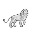 walking lion sketch vector image vector image