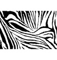 Zebra Stripes Pattern vector image vector image