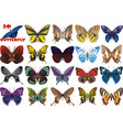 a set of beautiful butterflies vector image vector image
