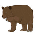 bear or ursus arctos vector image