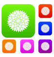 flower set color collection vector image