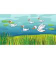 Ducks looking for foods vector image vector image