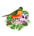 small tropical bird with flowers orchid spotted vector image