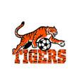 tiger dribbling soccer ball mascot vector image vector image