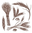 Wheat Sketch Set vector image
