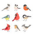 collection cute winter birds vector image