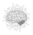 hand drawn human brain with sunburst vector image vector image